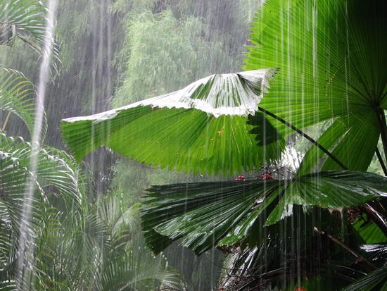 Monsoon Rain, Bali