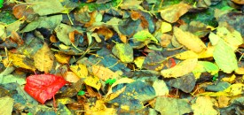 OMG This Autumn – For Joshua