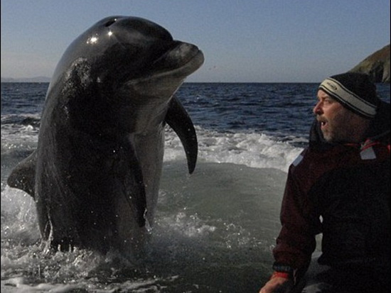 Dolphin and Human