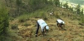 Record Tree Planting in Bhutan