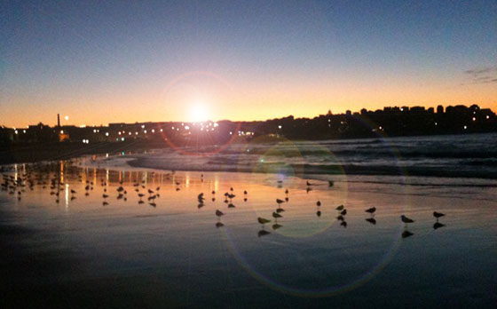 Bondi in the morning