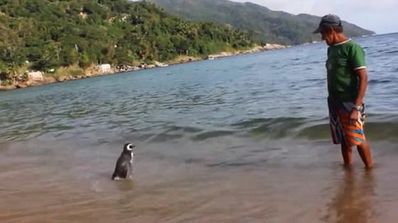 Fisherman and penguin