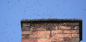 The swarm! The swarm!