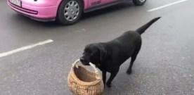 A really smart dog