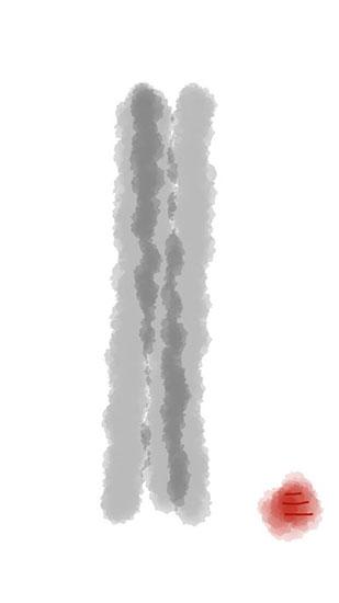 Sanjiva drawing