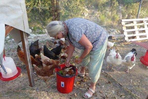Uma feeding her happy chickens