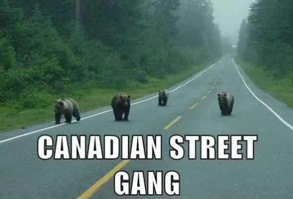 Canadian street gang