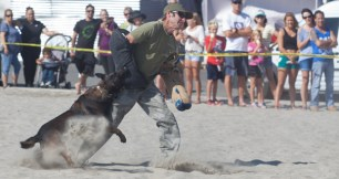 OPD K-9 grabs a hold of David Greene with Performance K-9 Training