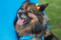 tails_and_trail2016_03_osidenews
