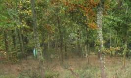 Sober lidera un proxecto transfronteirizo para pór en valor os recursos forestais