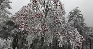 A neve ilumina a paisaxe en Cabeza de Manzaneda