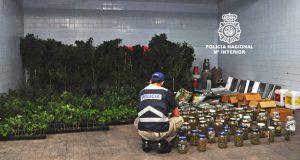 """Detido un veciño de Monterrei por producir marihuana """"indor"""" e traficar con ela no seu obradoiro de Cualedro"""