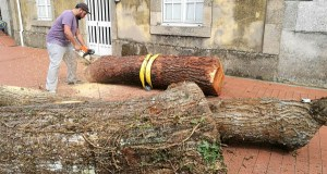 Concurso de talla en madeira con motoserra, en Sober