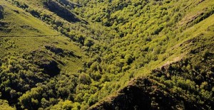 En Marea pedirá no Parlamento que O Teixadal se declare parque natural
