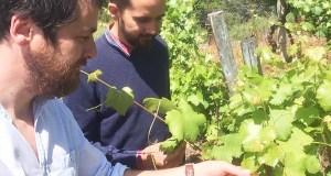 """O director editorial da """"Guía Peñín"""" cata os viños valdeorreses"""