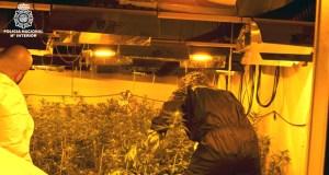 (Vídeo) A Policía detén a tres homes por cultivar 3.858 plantas de marihuana nunha nave do Polígono de San Cibrao