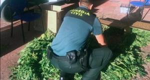 A Garda Civil da Rúa incauta varios quilos de marihuana a un veciño de Vilela
