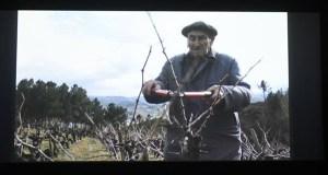 "O filme valdeorrés ""Os Fillos da Vide"", no ciclo ""Miradas etnográficas"" do Museo Etnolóxico de Ribadavia"