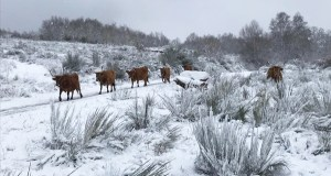 A neve deixa sentir a súa presenza e cubre as zonas altas ourensás