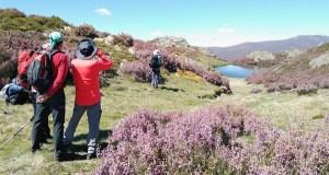 """""""As Cores de Trevinca"""", unha actividade para desfrutar das aves na alta montaña galega"""