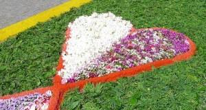 O casco vello do Barco pide axuda á veciñanza da vila e doutros lugares para elaborar as alfombras florais