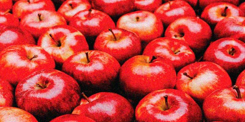 Ações da Pomi Frutas - Os Melhores Investimentos