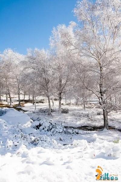 Neve no parque natural do alvao-9