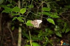 Monteverde - caminhada noturna-4