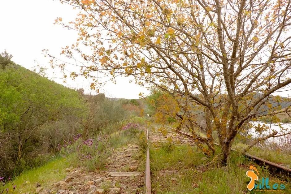 linha do douro - Barca D Alva - Pocinho-31
