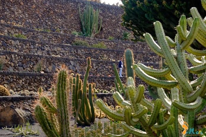 lanzarote - Jardin de Catus - Os Meus Trilhos-0315