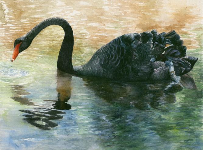 Max Neale - Black Swan