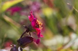 Tina Bettison - Carnival Flower