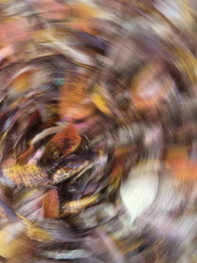 Tina Bettison - Swirl of Leaves