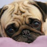 Купите бабушке собаку или собаки для пожилых людей