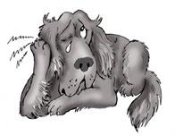 Лечение отита у собак. Симптомы отита у собак.