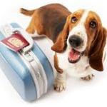 Чипирование собак: а нужно ли оно