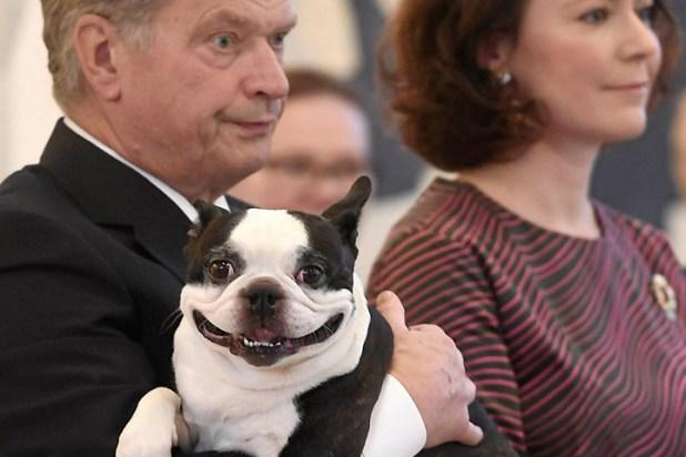 Собака президента
