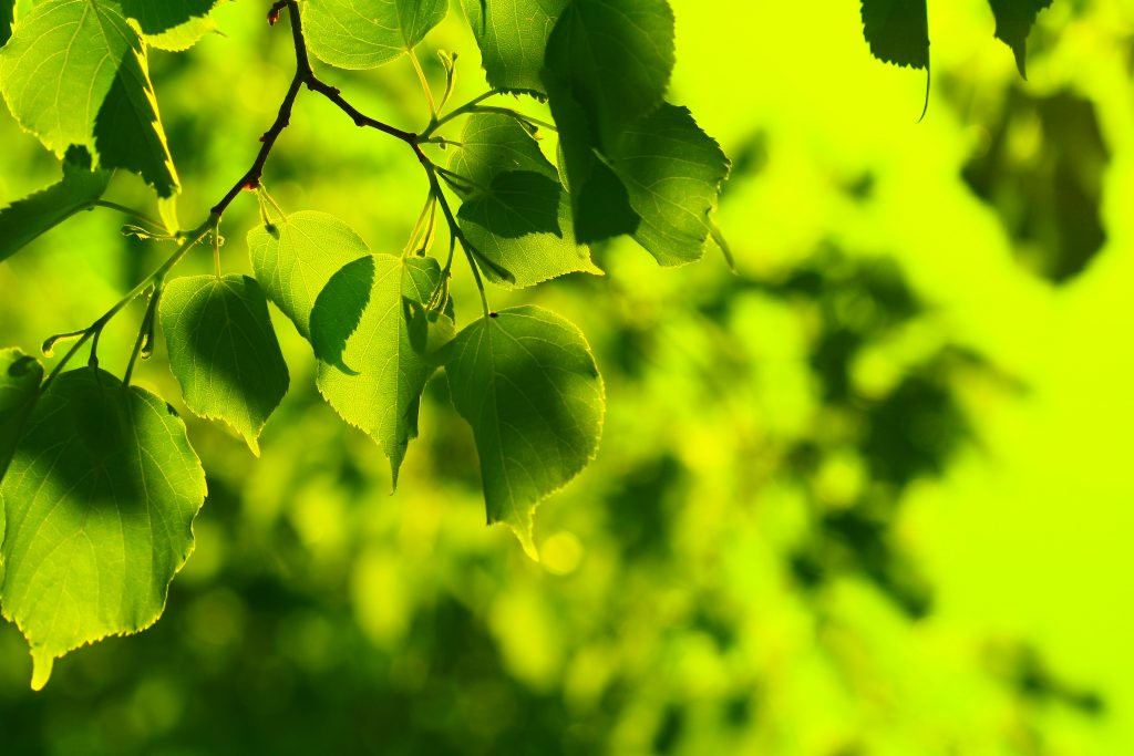 spring-green-leaves-1024×683