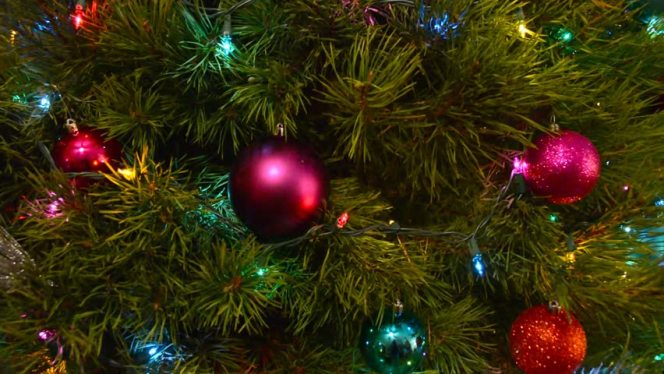 Xmas Tree Close up