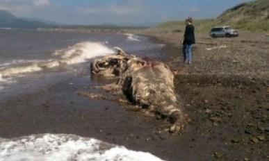 Sea-creature-in-Russia-310798