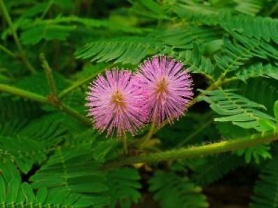 farting-plant
