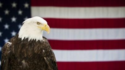 ask-bald-eagle-iStock_000017215186Large-E