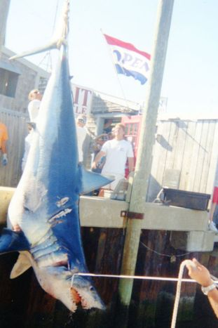 shark, mako (shortfin)