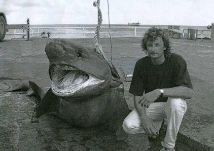 shark, sixgilled