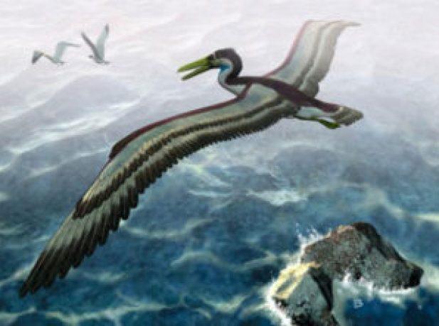 ancient-goose-1