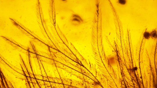 cc_microscopic-barbules-on-tail-feathers3_16x9