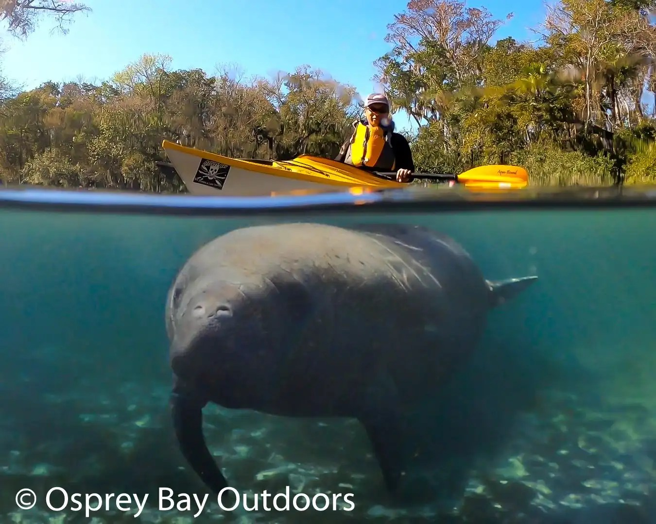 Paddling with Manatees.