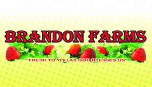 Strawberry_s.brandonfarms