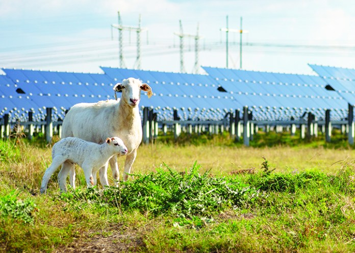 Teco Doubling 600mw Solar Farm To Expand Power To Growing