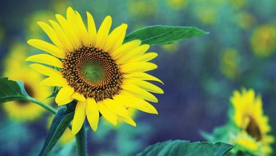 Photo of لوِّني حديقتك بالأزهار